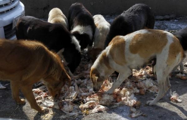 Xử lý chó hoang trên thế giới: Nơi đánh đập, đầu độc, chỗ đưa chó hoang về trung tâm bảo trợ để chờ nhận nuôi - Ảnh 2.