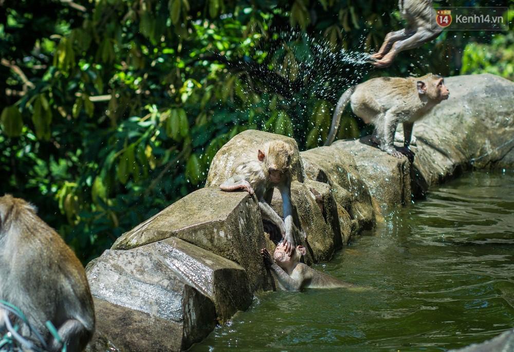 Chùm ảnh: Chuyện về đàn khỉ đuôi dài nương náu trong ngôi chùa ở Vũng Tàu, sống nhờ thức ăn của du khách - Ảnh 6.