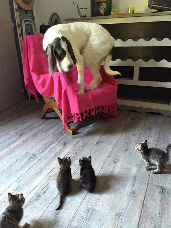 Khuôn mặt đáng thương của 14 chú chó bị những con mèo đanh đá bắt nạt - Ảnh 11.