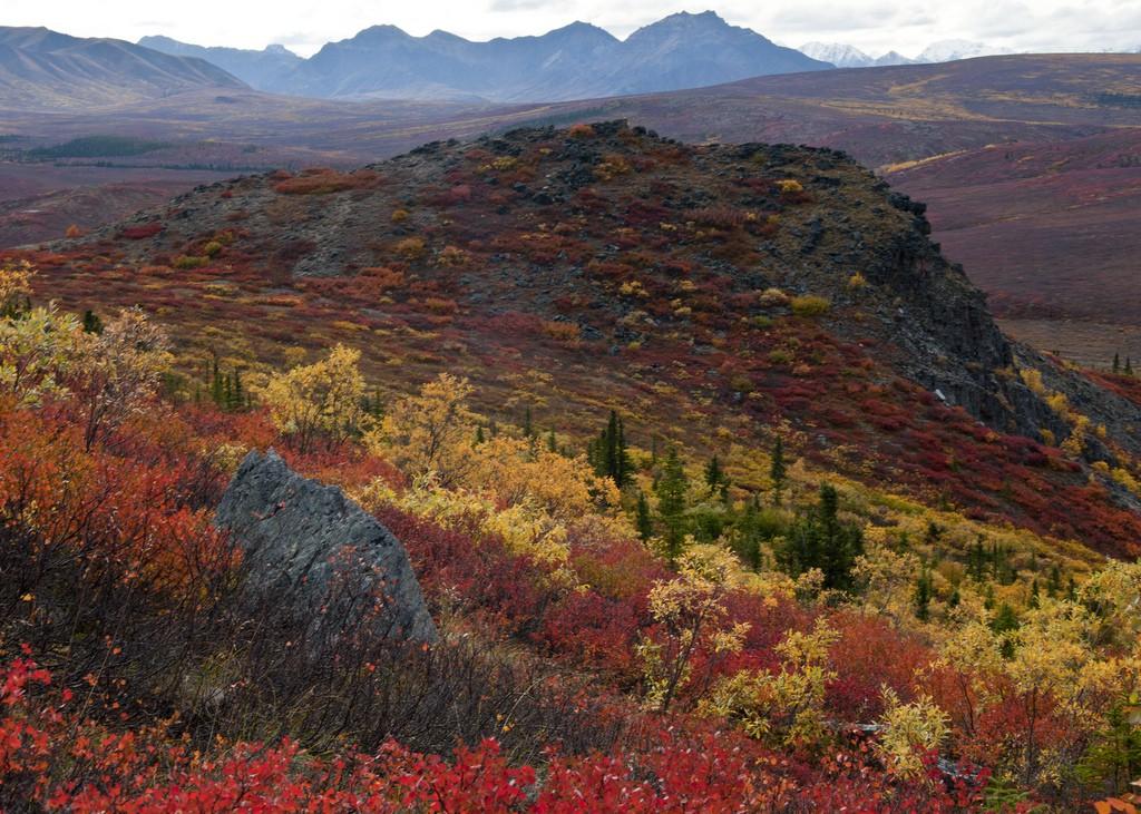 Ngắm phong cảnh đẹp đến ngoạn mục của những khu rừng vào mùa thu - Ảnh 11.