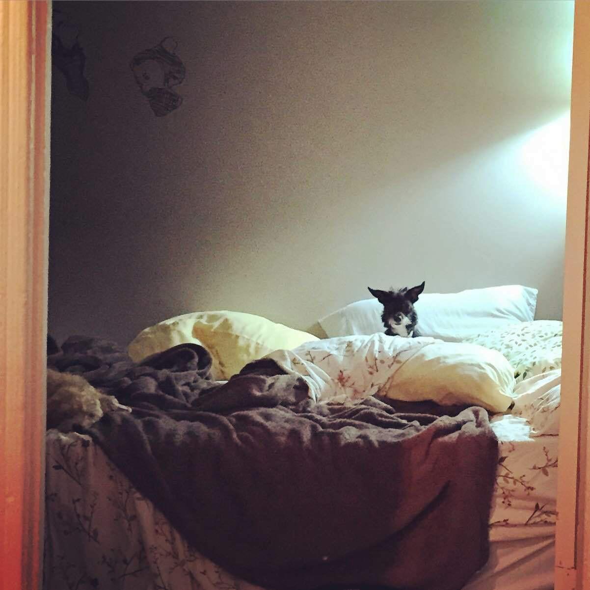 15 chú chó xấu tính chỉ thích độc chiếm một mình một giường mới chịu - Ảnh 27.