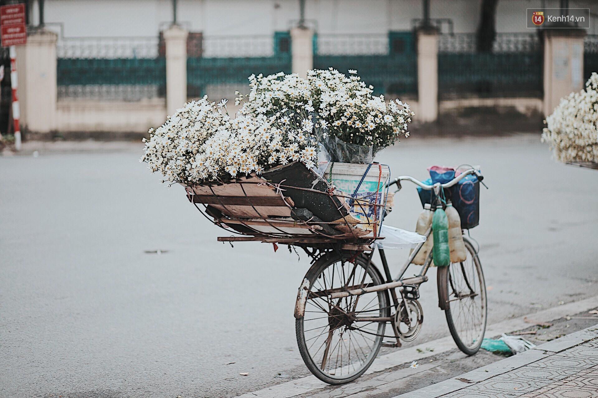 Đông về Hà Nội có mong gì đâu, chỉ chờ một mùa cúc họa mi trên phố - Ảnh 2.