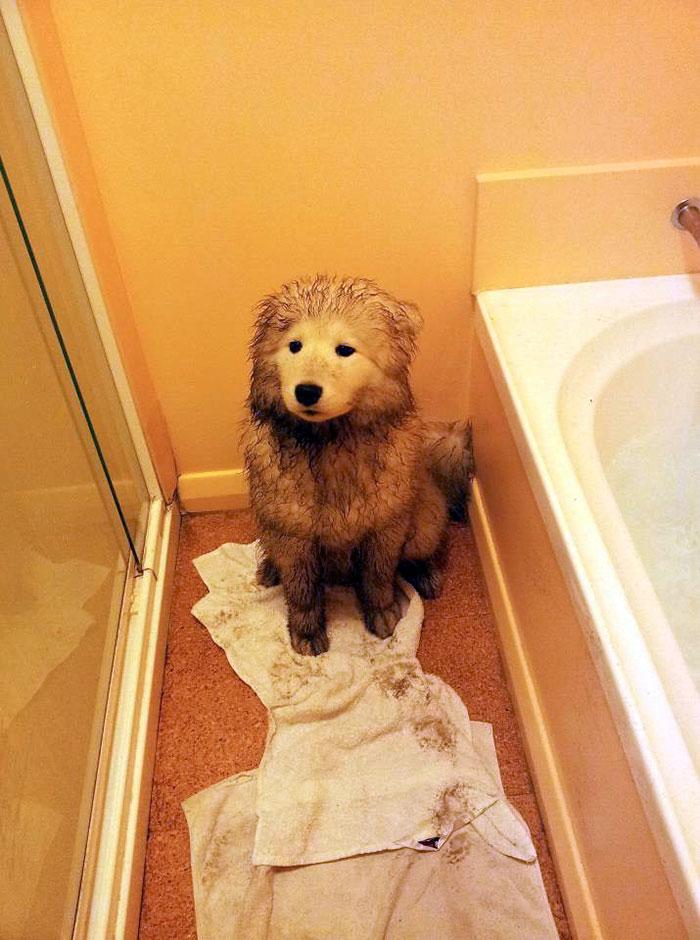16 chú chó không dùng bột giặt nhưng cũng chẳng ngại gì vết bẩn - Ảnh 25.