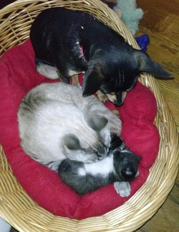 20 chú chó lẩn thẩn cứ nghĩ mình là loài mèo sang chảnh - Ảnh 11.