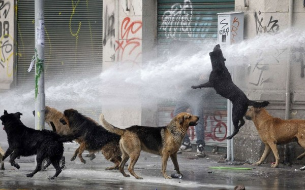 Xử lý chó hoang trên thế giới: Nơi đánh đập, đầu độc, chỗ đưa chó hoang về trung tâm bảo trợ để chờ nhận nuôi - Ảnh 1.