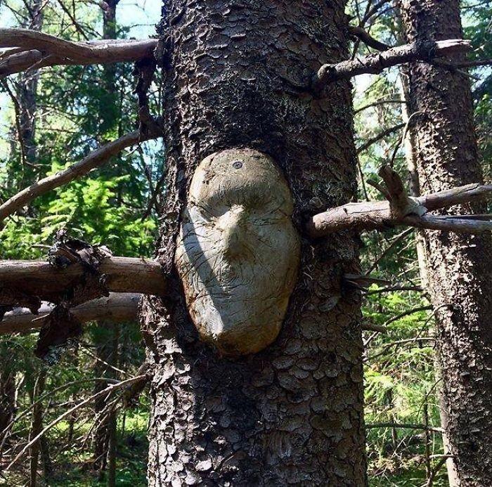 16 gương mặt ma quái tình cờ mọc trên những thân cây vô tri, vô giác - Ảnh 7.