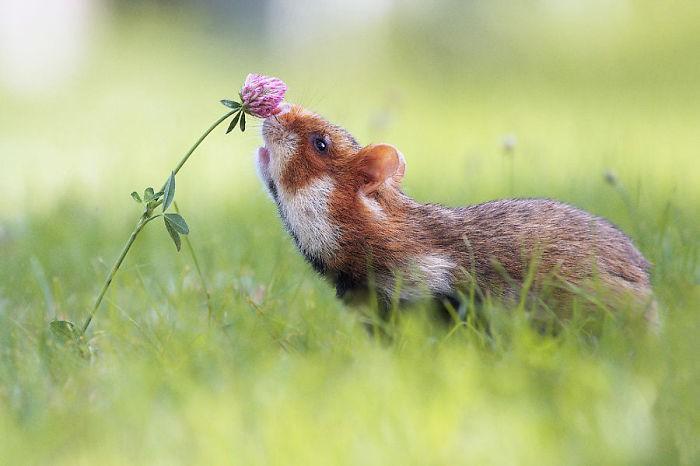 Cuộc sống hưởng thụ của 15 chú chuột hamster sống ở ngoài thế giới tự nhiên - Ảnh 25.