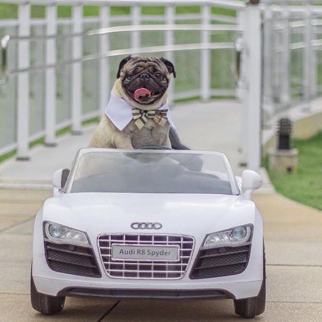 Hâm mộ cuộc sống sang chảnh của 11 chú chó đại gia ăn chơi không sợ mưa rơi - Ảnh 13.