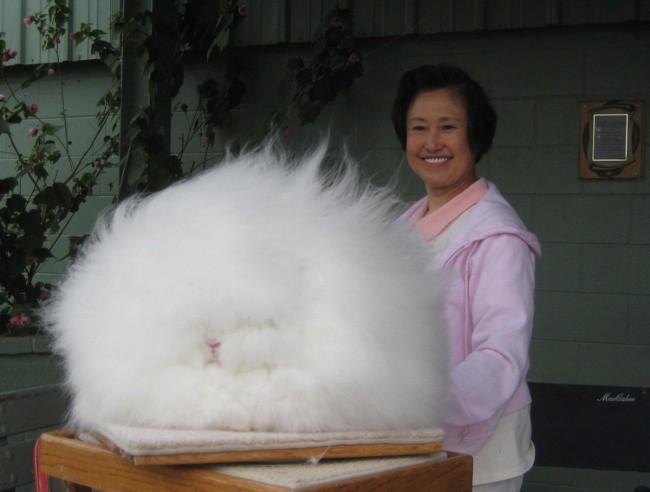 Chiêm ngưỡng 17 loài vật sở hữu bộ lông đặc biệt nhất trần đời - Ảnh 13.
