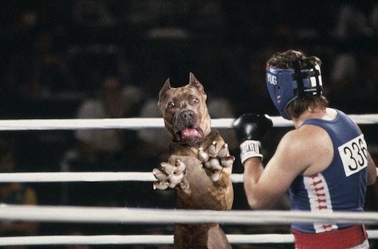 Loạt ảnh chế chú chó sợ hãi khiến bạn xem xong cũng phải buồn cười - Ảnh 13.