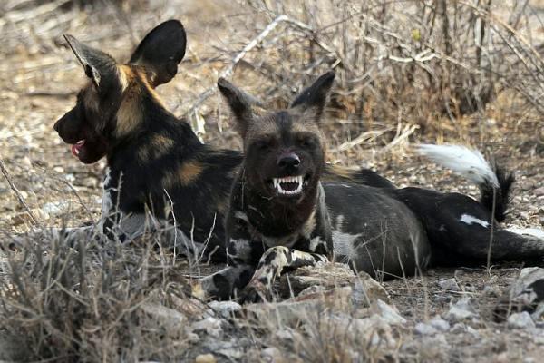 Xử lý chó hoang trên thế giới: Nơi đánh đập, đầu độc, chỗ đưa chó hoang về trung tâm bảo trợ để chờ nhận nuôi - Ảnh 5.
