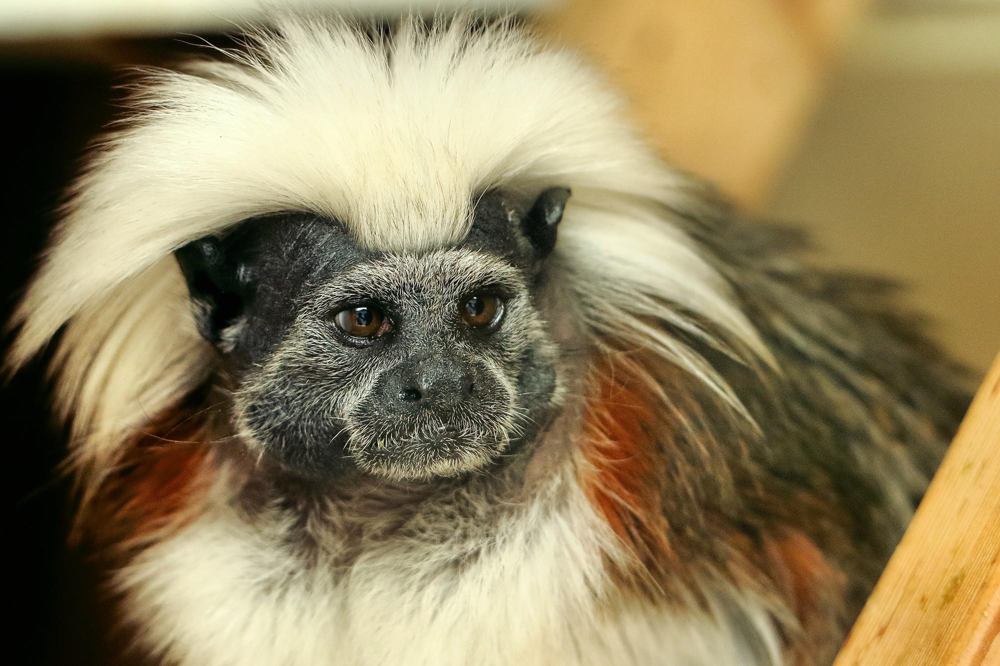 Chiêm ngưỡng 17 loài vật sở hữu bộ lông đặc biệt nhất trần đời - Ảnh 15.