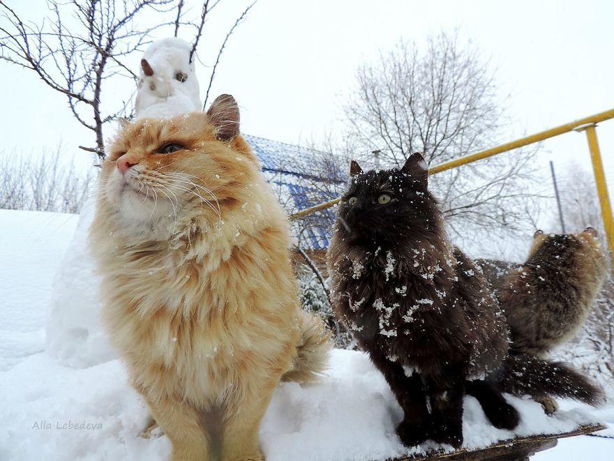Đàn mèo Siberia xâm chiếm khu vườn của người nông dân, thế nhưng ý đồ của chúng vô tình trở thành việc tốt - Ảnh 15.