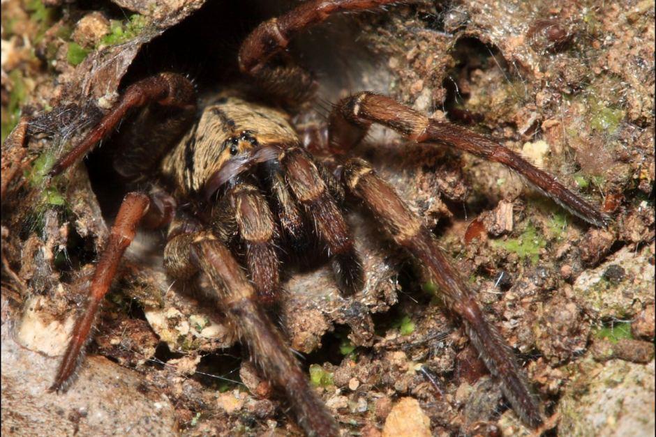 Loài nhện còn một khả năng cực kỳ kinh dị mà đến bây giờ khoa học mới phát hiện ra - Ảnh 2.