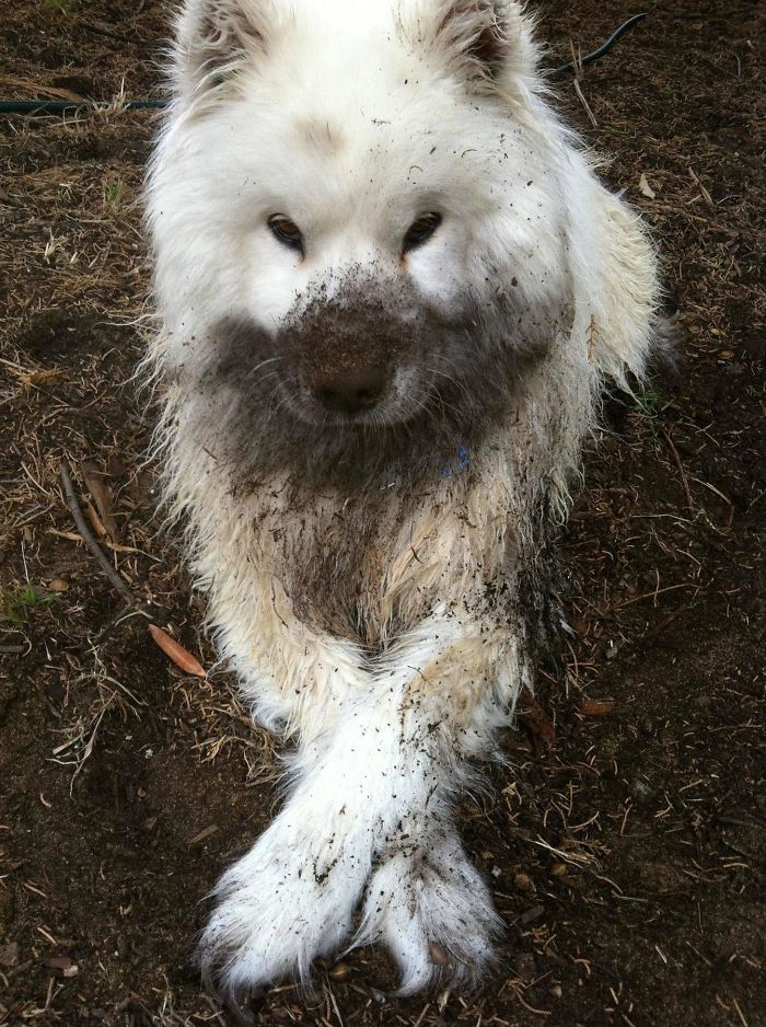16 chú chó không dùng bột giặt nhưng cũng chẳng ngại gì vết bẩn - Ảnh 27.