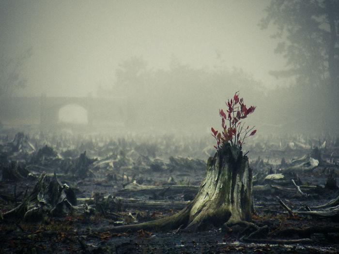 Sức sống mãnh liệt bất diệt của 22 chiến binh cây xanh - Ảnh 13.
