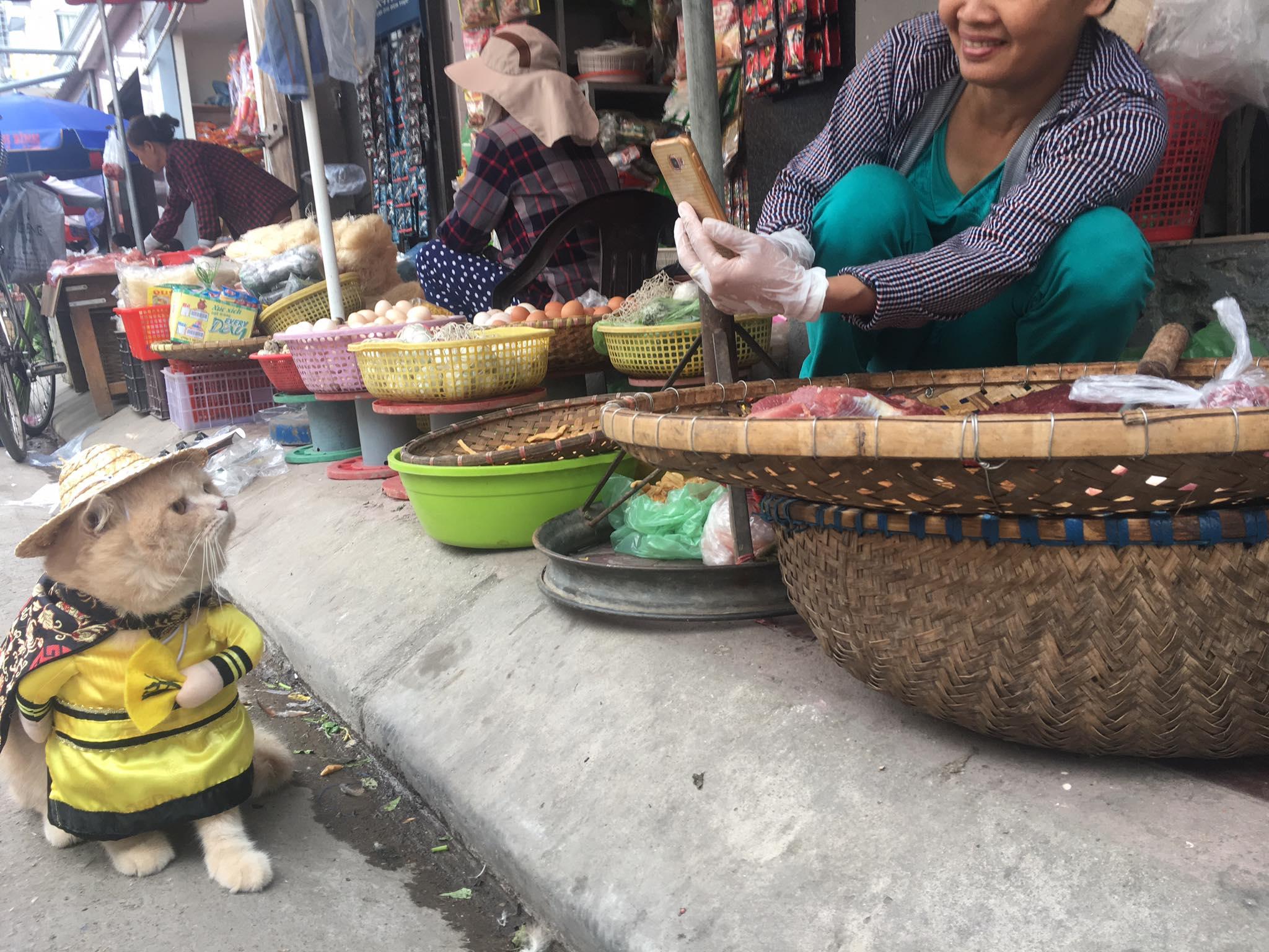 Gặp chú mèo Hoàng Thượng đi chợ vi hành, các con sen đều đứng ngồi không yên - Ảnh 2.