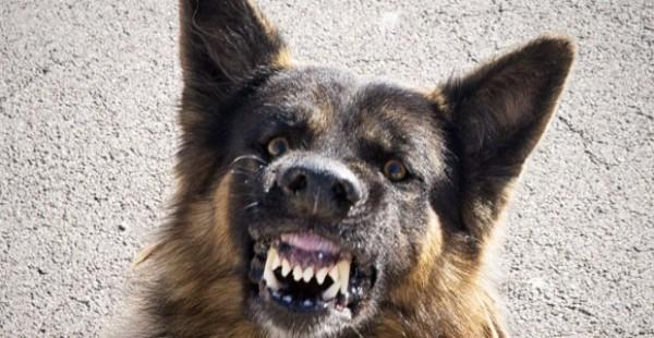 Xử lý chó hoang trên thế giới: Nơi đánh đập, đầu độc, chỗ đưa chó hoang về trung tâm bảo trợ để chờ nhận nuôi - Ảnh 4.
