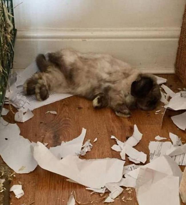 21 chú chó mèo nhân dịp chủ đi vắng là phá banh cả nhà - Ảnh 15.