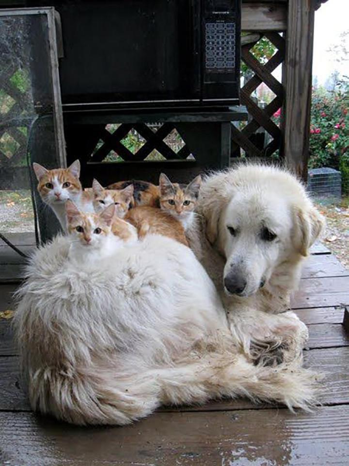 Khuôn mặt đáng thương của 14 chú chó bị những con mèo đanh đá bắt nạt - Ảnh 15.
