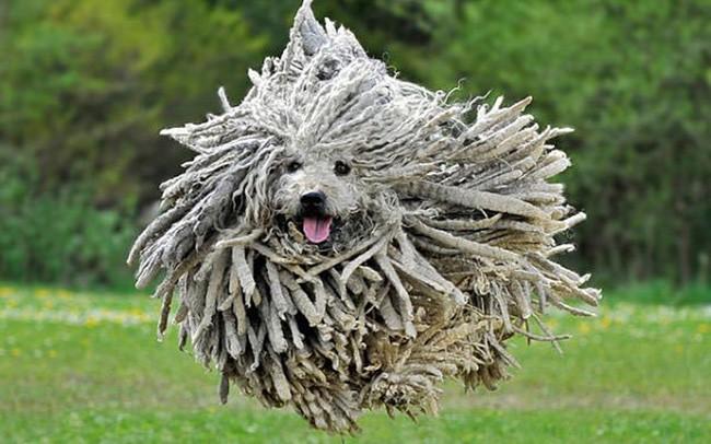 Chiêm ngưỡng 17 loài vật sở hữu bộ lông đặc biệt nhất trần đời - Ảnh 17.