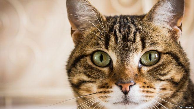 Loài mèo đã bắt đầu xâm chiếm thế giới từ khi nào? - Ảnh 5.