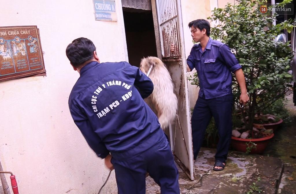 Clip cận cảnh quá trình chăm sóc tại điểm tập kết chó thả rông ở Sài Gòn trong lúc chờ chủ đến nhận - Ảnh 2.