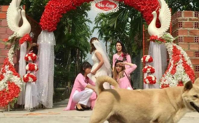 1001 khoảnh khắc mấy con boss bon chen phá ảnh cưới - Ảnh 7.