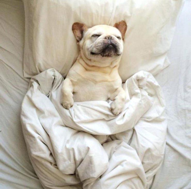 15 chú chó xấu tính chỉ thích độc chiếm một mình một giường mới chịu - Ảnh 9.