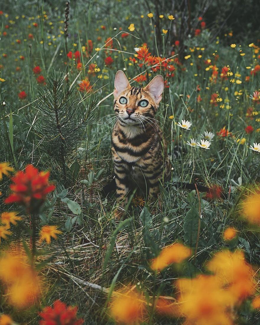 Gặp gỡ chú mèo xinh đẹp cùng cô chủ đi du lịch khắp thế gian - Ảnh 19.