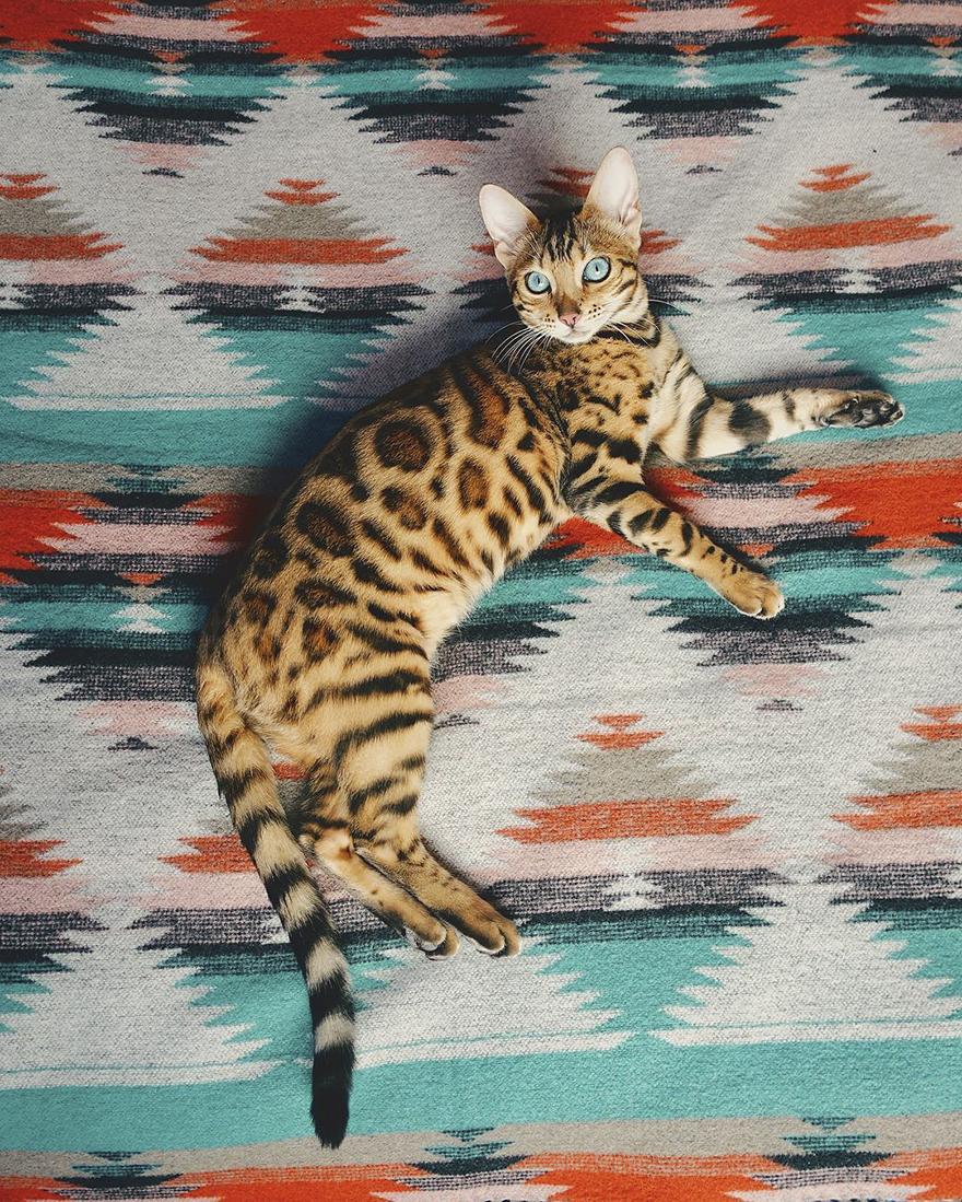 Gặp gỡ chú mèo xinh đẹp cùng cô chủ đi du lịch khắp thế gian - Ảnh 23.