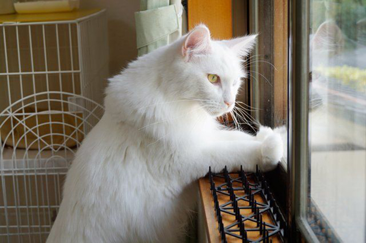 Người Nhật mua bẫy gai để ngăn mèo chạy nhảy lung tung, kết quả khiến ai cũng dở khóc dở cười - Ảnh 3.