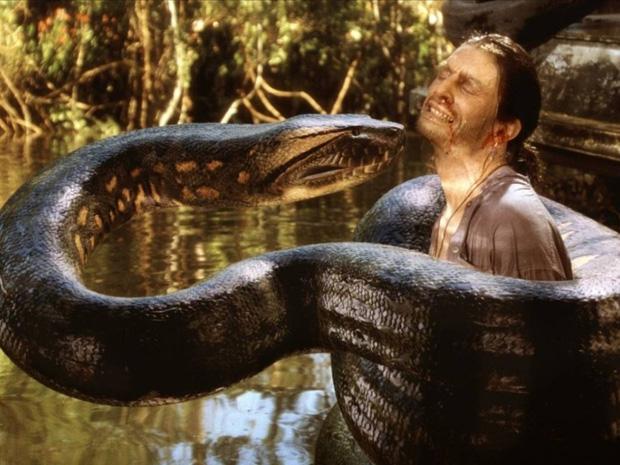 Trăn Anaconda vs rắn hổ mang chúa - quái vật đụng độ, loài nào thắng? - Ảnh 2.