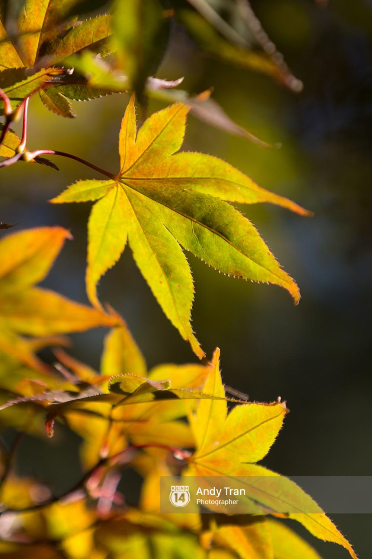 Không phải tự nhiên mà người ta nói: Nhất định phải đến Hàn Quốc một lần vào mùa thu lá vàng - Ảnh 13.
