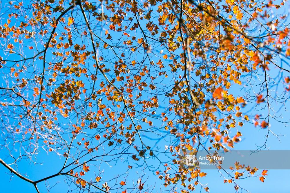 Không phải tự nhiên mà người ta nói: Nhất định phải đến Hàn Quốc một lần vào mùa thu lá vàng - Ảnh 12.