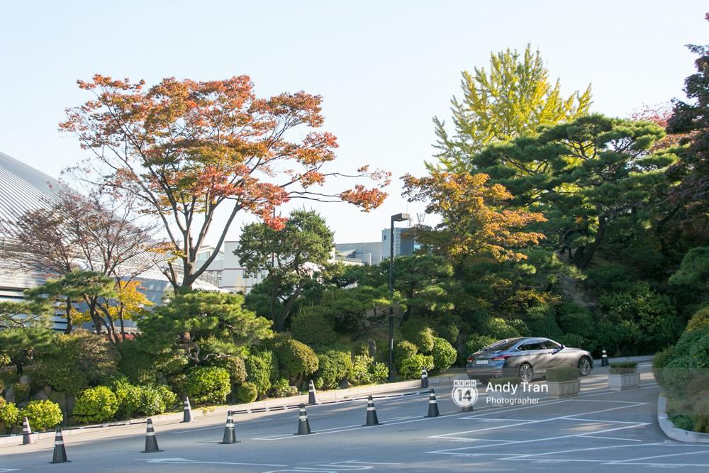 Không phải tự nhiên mà người ta nói: Nhất định phải đến Hàn Quốc một lần vào mùa thu lá vàng - Ảnh 10.