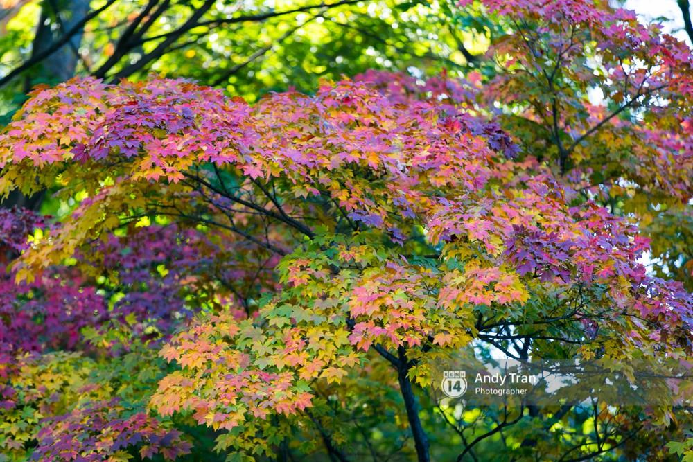 Không phải tự nhiên mà người ta nói: Nhất định phải đến Hàn Quốc một lần vào mùa thu lá vàng - Ảnh 9.