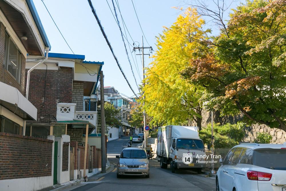 Không phải tự nhiên mà người ta nói: Nhất định phải đến Hàn Quốc một lần vào mùa thu lá vàng - Ảnh 8.