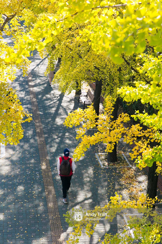 Không phải tự nhiên mà người ta nói: Nhất định phải đến Hàn Quốc một lần vào mùa thu lá vàng - Ảnh 2.