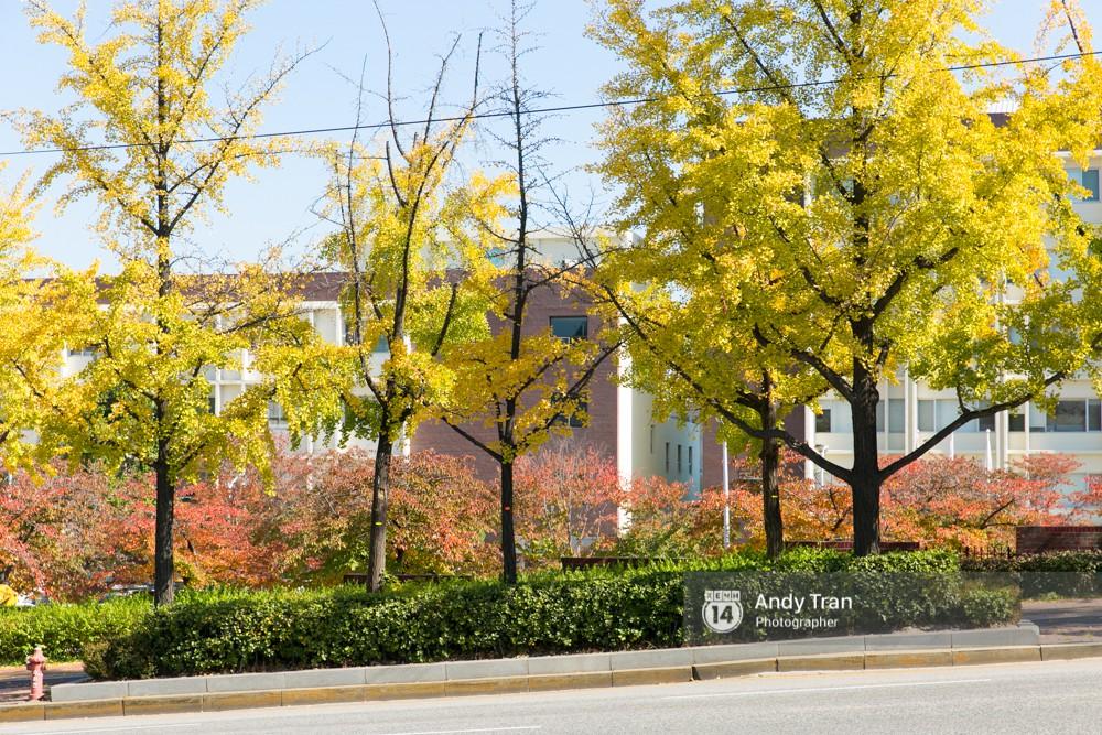 Không phải tự nhiên mà người ta nói: Nhất định phải đến Hàn Quốc một lần vào mùa thu lá vàng - Ảnh 4.