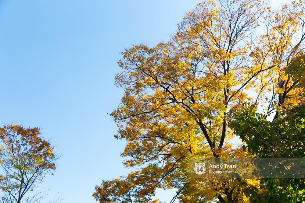 Không phải tự nhiên mà người ta nói: Nhất định phải đến Hàn Quốc một lần vào mùa thu lá vàng - Ảnh 3.