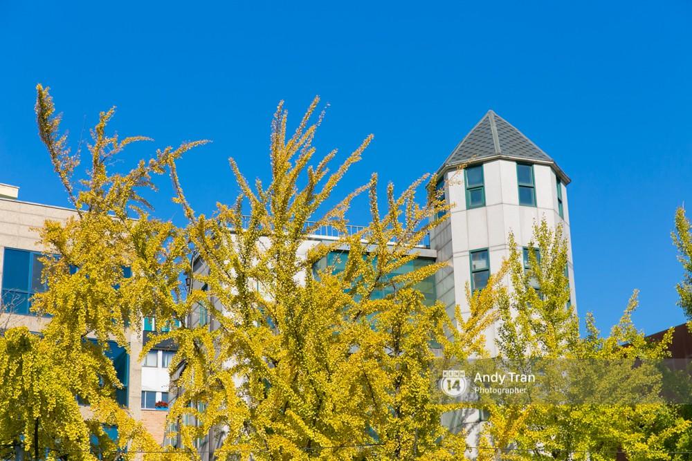 Không phải tự nhiên mà người ta nói: Nhất định phải đến Hàn Quốc một lần vào mùa thu lá vàng - Ảnh 23.