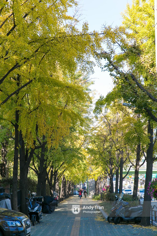Không phải tự nhiên mà người ta nói: Nhất định phải đến Hàn Quốc một lần vào mùa thu lá vàng - Ảnh 21.