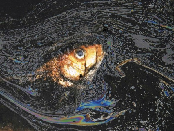 Cả tuần nay sinh vật chết hàng loạt - cảnh báo môi trường đến mức báo động rồi - Ảnh 6.