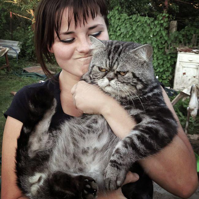 16 chú mèo ghét cay ghét đắng việc selfie cùng chủ nhân - Ảnh 1.