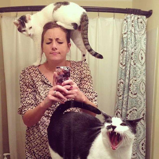 16 chú mèo ghét cay ghét đắng việc selfie cùng chủ nhân - Ảnh 31.
