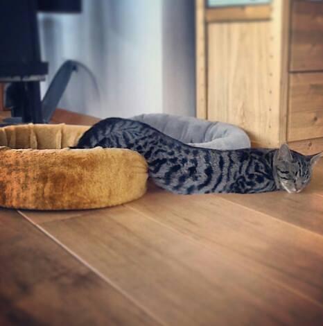 17 chú mèo vô duyên thích chỗ nào là tự tiện chui vào đấy - Ảnh 9.