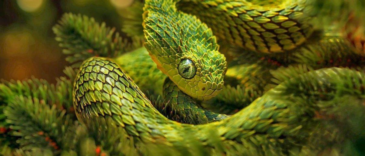 Hóa ra loài rắn trong bản hit mà Taylor Swift mới tung ra không hề tầm thường - Ảnh 7.
