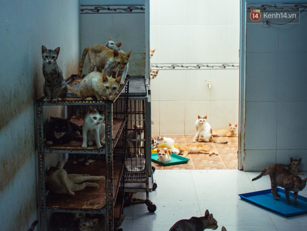 Người phụ nữ hy sinh 20 năm tuổi xuân để cưu mang hàng trăm chú mèo hoang ở Sài Gòn - Ảnh 4.