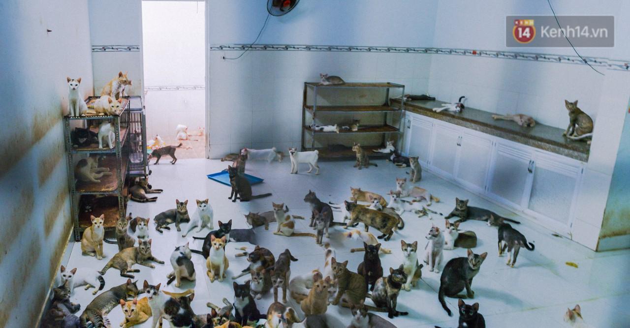 Người phụ nữ hy sinh 20 năm tuổi xuân để cưu mang hàng trăm chú mèo hoang ở Sài Gòn - Ảnh 2.
